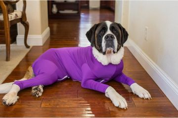 OMG, These Ridiculous Dog Leotards Are Actually the Greatest Hack For Pet Owners