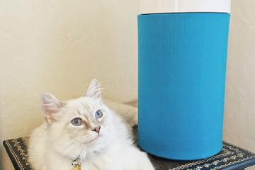 I'm Allergic to My Cat, and This $99 Air Purifier Makes Living With Him Bearable