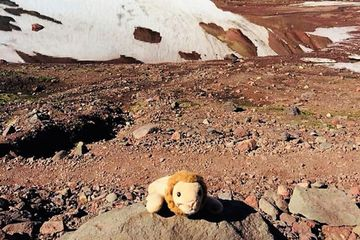 Little girl reunited with toy lion lost on remote hike