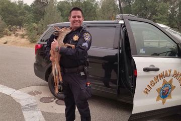 'Can you take a deer?': Fawn rescued from wildfire by highway patrol officer