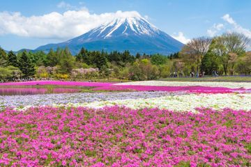 Let's Go Flower Chasing - Top 10 Destinations to See Spring Flowers Around the World